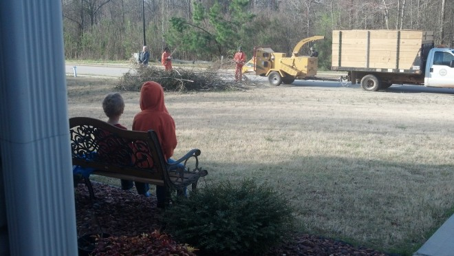 watching our trees turn into mulch