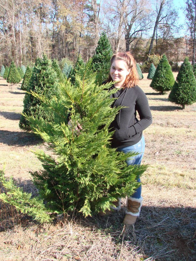 Aunt Heathers first time cutting down the tree.. she picked hers out RIGHT away!